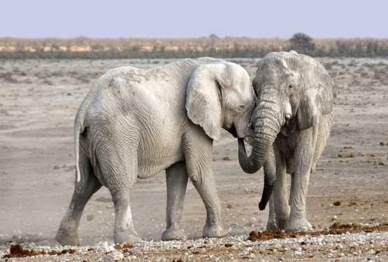 Elefantenschwänze - Geburtstagsspiel für Kinder oder Silvesterspiel