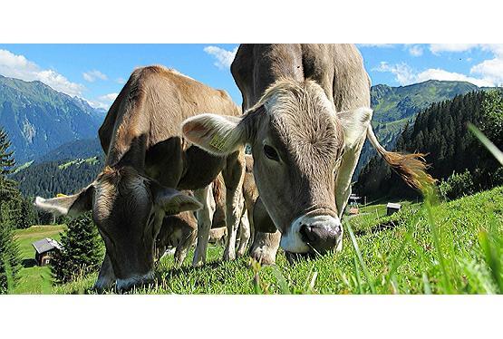 Familienurlaub in Oberösterreich