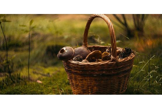Ausflugsziel Wald – Vorsicht beim Pilze sammeln