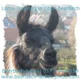 Beerbach-Lamas